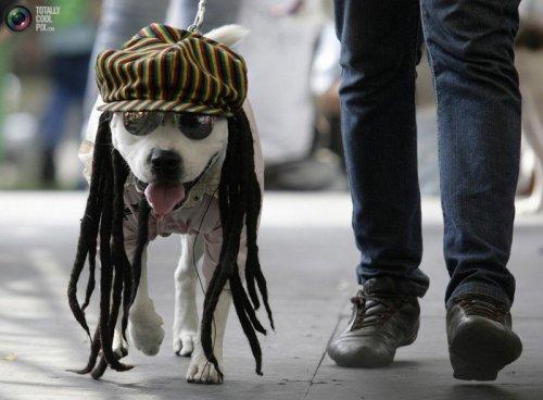 Прикольная одежда для собак