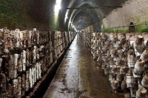 Грибной туннель в Австралии