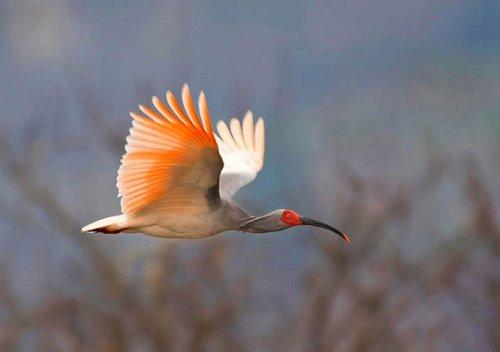 Фотоконкурс, посвященным редчайшим птицам мира
