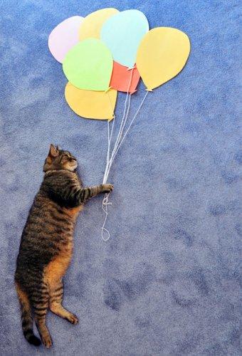 Серия фотоснимков Daydreaming Cat