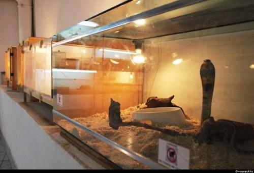 Ядовитая профессия змеелов