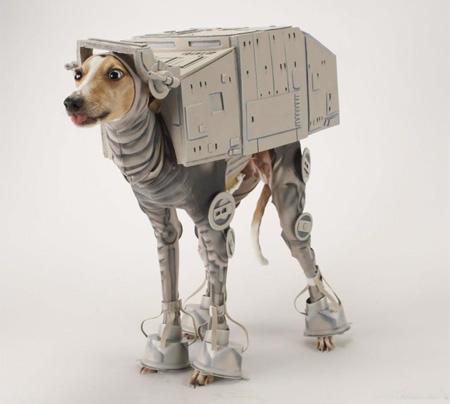 Костюм для собаки к Хеллоуину