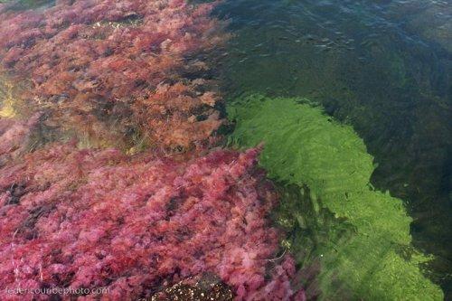 Каньо Кристалес - река пяти цветов