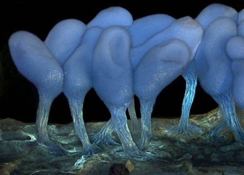 Финалисты конкурса  Olympus BioScapes