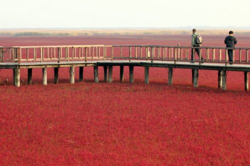 Panjin Red Beach – необычный красный пляж в Китае