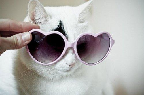 Кошки в очках