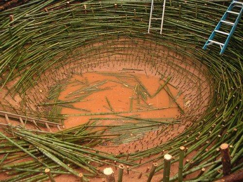 Гигантское птичье гнездо
