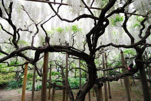 Цветочный парк Асикага