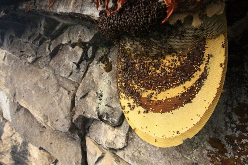 Непальские охотники за медом