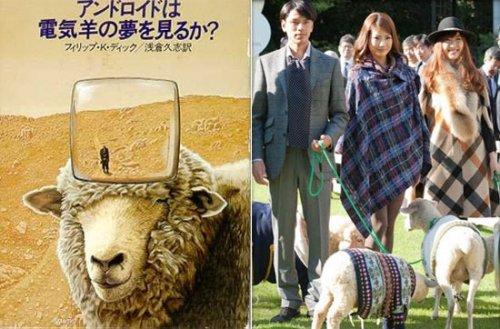 Первый в мире отель для овец