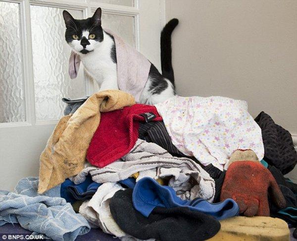Кот, таскающий соседские вещи