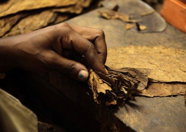 Как делаются самые известные кубинские сигары