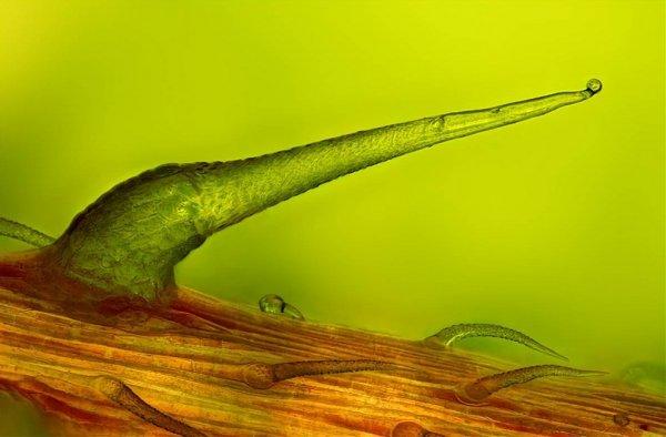 Лучшие работы конкурса Nikon Small World Photomicrography 2012