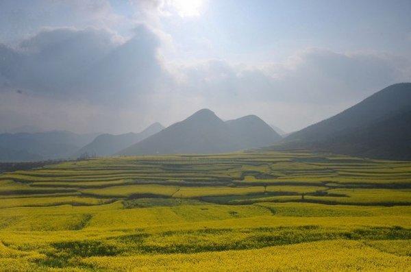 Рапсовые поля в Люпинге (Luoping), Китай