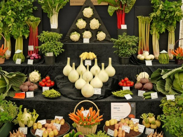 12 художественно оформленных стендов с овощами