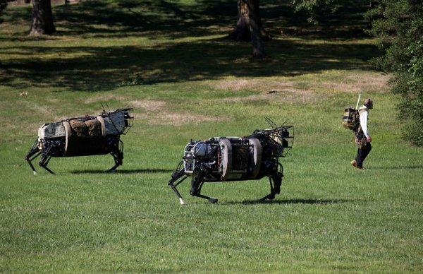 Роботы для работы и игр