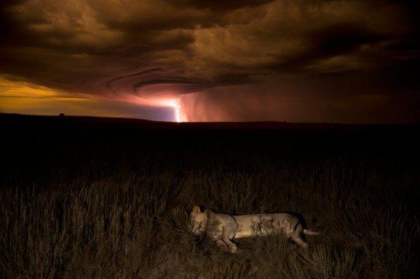 Лучший фотограф дикой природы 2012-го года
