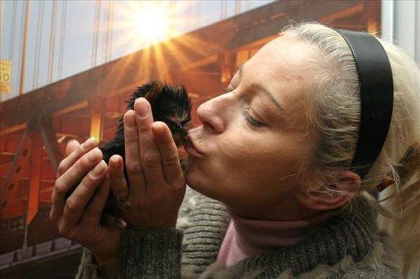 Самая маленькая собачка в мире – терьер Мейси из Польши