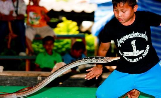 Таиландская «Деревня Кобр», где люди и змеи живут в гармонии