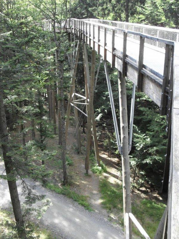 Самая длинная в мире дорожка, расположенная на уровне крон деревьев