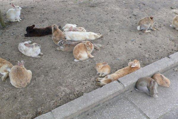 Остров кроликов Окуношима