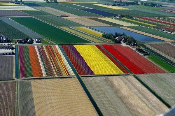 Красота и великолепие тюльпановых полей