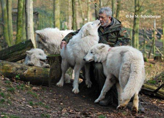 Жизнь с волками: удивительная история Вернера Фройнда