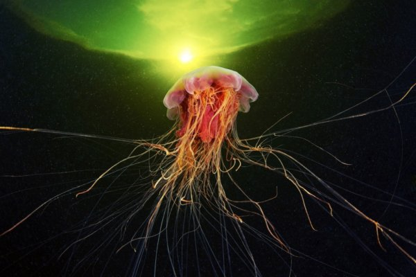 Подводный мир в фотографиях Александра Семёнова (26 фото)