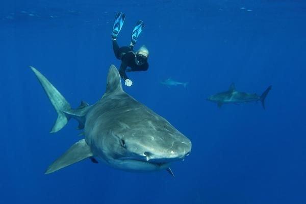 Заклинательница акул: молодая защитница природы танцует с белыми акулами