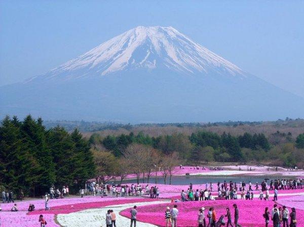 Цветение шиловидного флокса в парке «Hitsujiyama», Япония