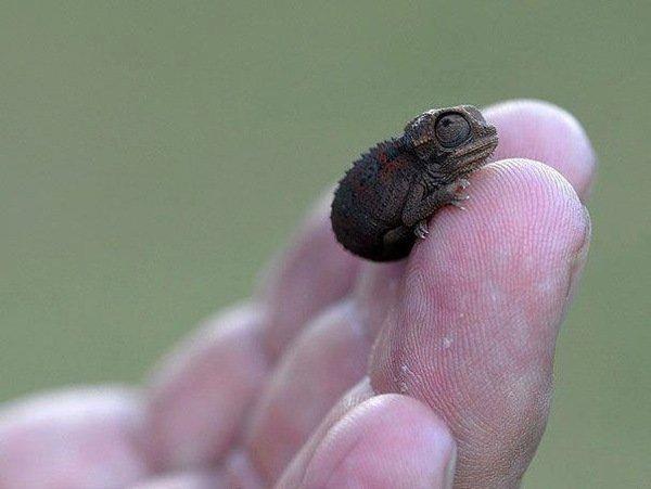 10 Невероятно крошечных животных