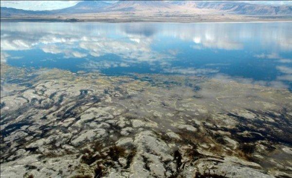 Солёное розовое озеро Натрон (17 фото)