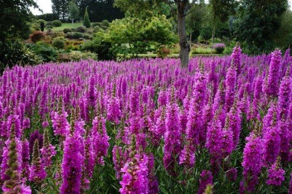 Восхитительные пейзажи частного парка Maple Glen (20 фото)