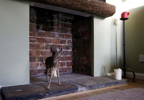 Малышка-антилопа Алуна (11 фото)