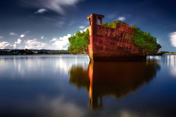SS Ayrfield – заброшенный корабль, превратившийся в плавающий лес (8 фото)