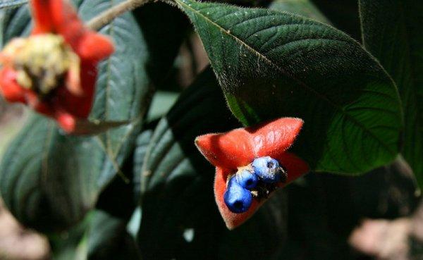 Соблазнительный цветок в виде алых женских губ (16 фото)