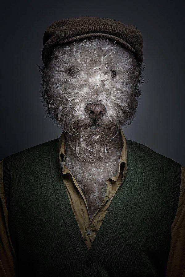 Портреты собак от Себастьяна Маньяни (8 фото)