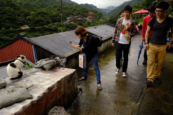 Тайваньская кошачья деревня (11 фото)