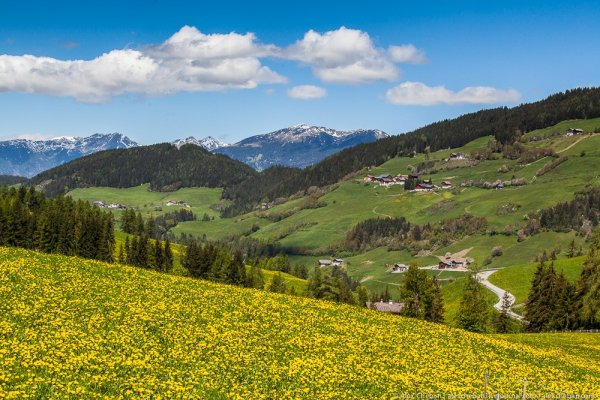 Одуванчиковая долина де Фюнес (15 фото)