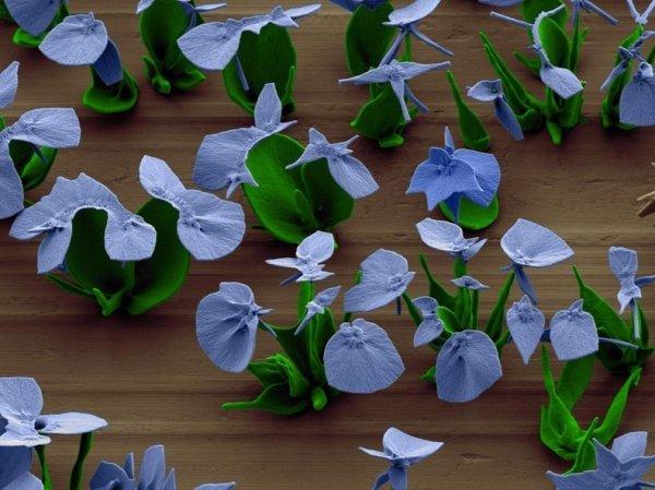 Исследователь выращивает микроскопические цветы, управляя процессом кристаллизации