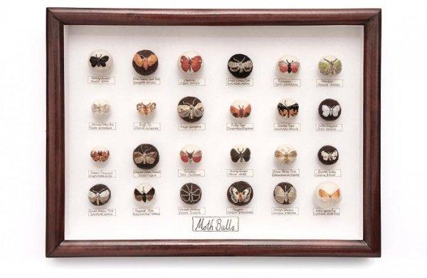 Насекомые из войлока, созданные Клэр Мойнихан (23 фото)