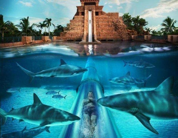Роскошный водный парк Aquaventure на Багамах (4 фото + 1 видео)