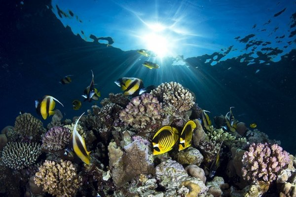 Победители конкурса подводных любительских фотографий