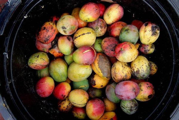 16 Самых полезных экзотических плодов (43 фото)
