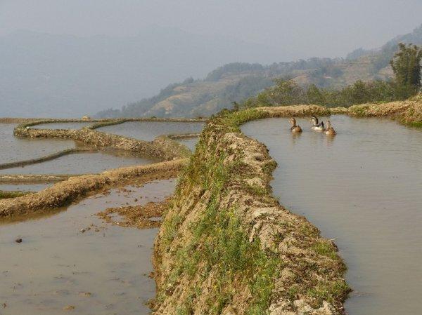 Рисовые террасы Хунхэ-Хани стали объектом Всемирного наследия ЮНЕСКО (15 фото)