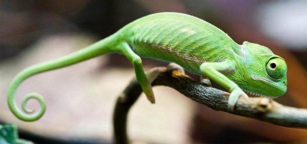 Жизнь животных планеты в фотографиях (24 фото)