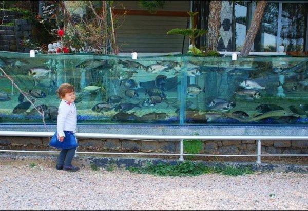 Житель Турции построил забор в виде аквариума (4 фото + 1 видео)