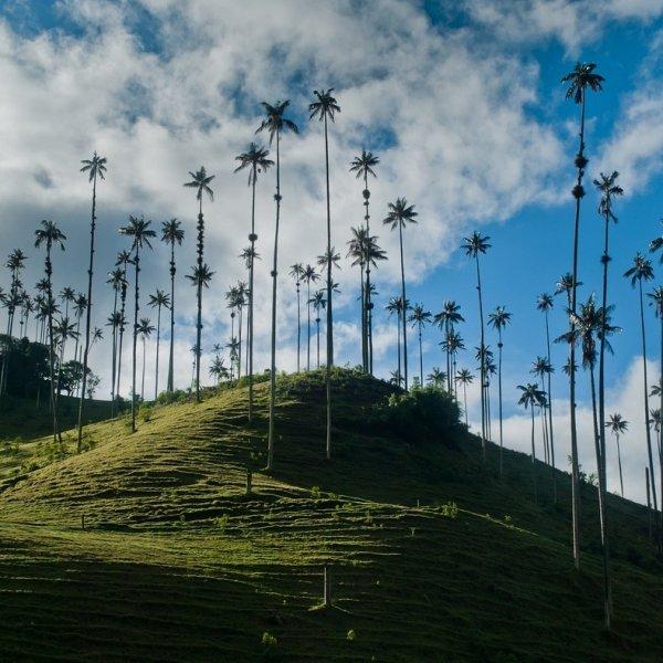 Долина Кокора: долина пальм