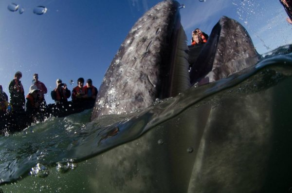 Морская прогулка с китами для самых смелых (21 фото)