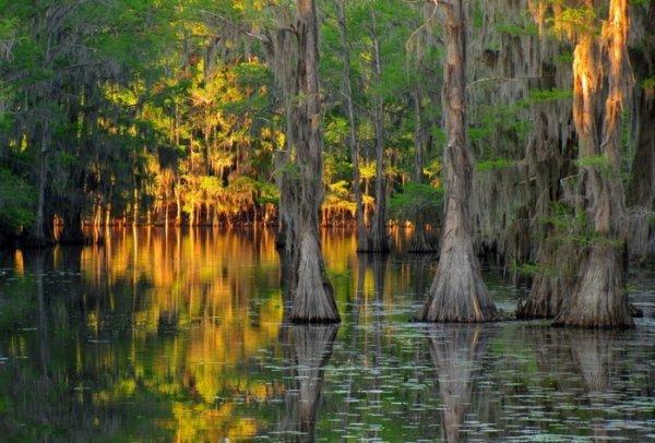 Уникальные кипарисовые леса озера Каддо (25 фото)